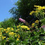 Bienen-Weide