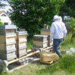 Rückgabe der ausgeschleuderten Honigwaben