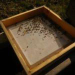 Es wird wärmer, die Bienen fliegen
